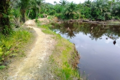 Peatland-Area-in-shabunda